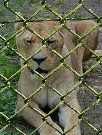 Howletts Wild Animal Park: 20180615_114844_large.jpg