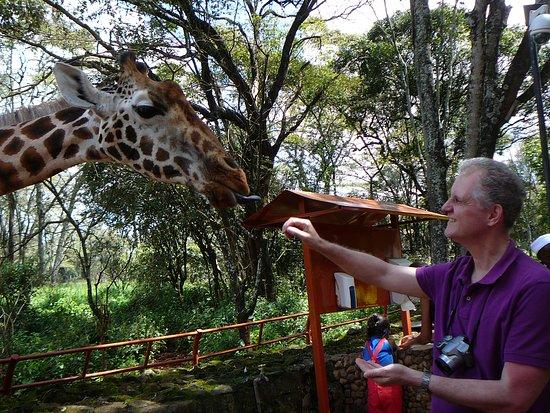 Giraffe Centre: Kézből esznek a zsirik
