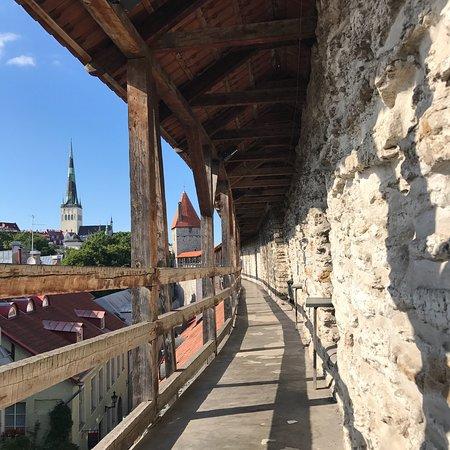 Бесплатные экскурсии по Таллину