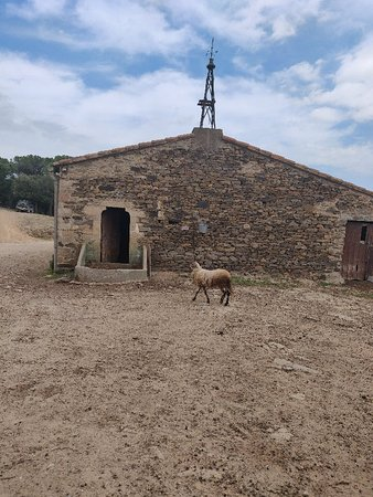Cruilles, Spain: IMG_20180617_170233_large.jpg