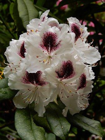Oregon Shakespeare Festival: Flower in Lithia Park