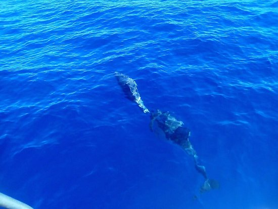 Trachilos, Grecja: Trips with dolphins