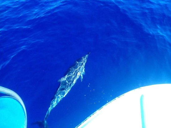 Trachilos, Grecja: Dolphins visit