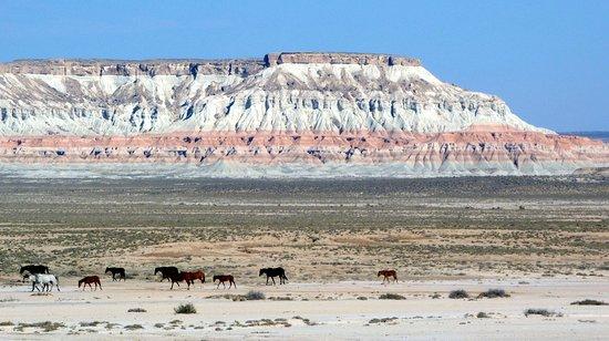 Balkanabat, Turkmenistan: Horses