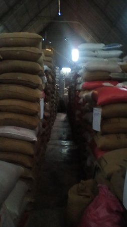 Zaragoza, El Salvador: the warehouse full of coffee beans