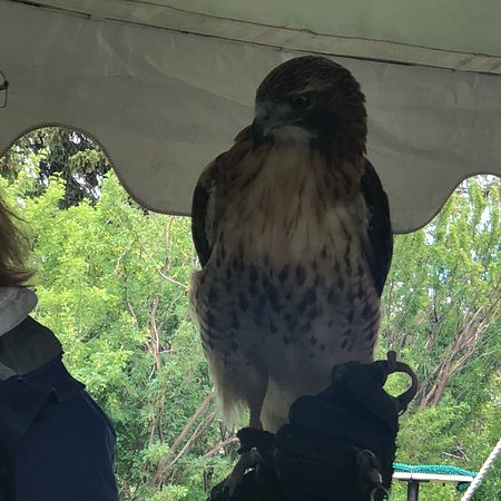 Teton Raptor Center: photo2.jpg