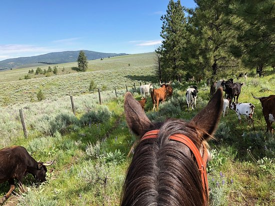 "The Resort at Paws Up: View from ""Buckshot"" -- one of the cattle drive horses."