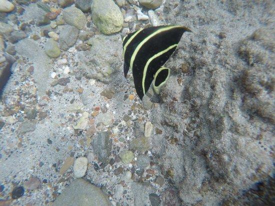 Kenepa Beach: Transparência da Agua
