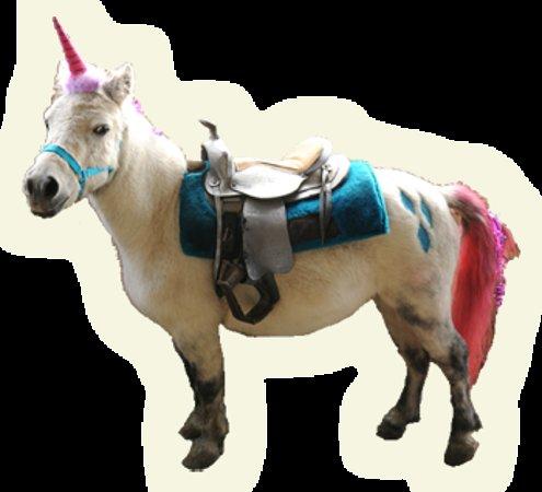 unicorns alacorns and pegaus are real at oregon dream ponies