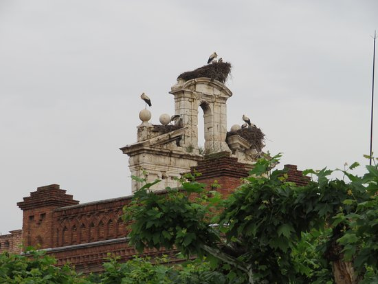 Plaza de Cervantes: A few of the 120 storks' nests that Alcalá is proud home to.