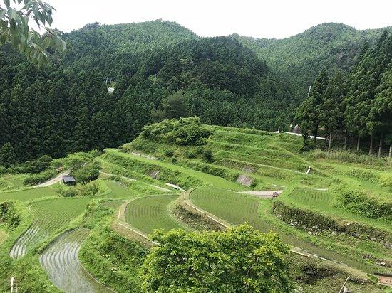 Kashihara Rice Terraces