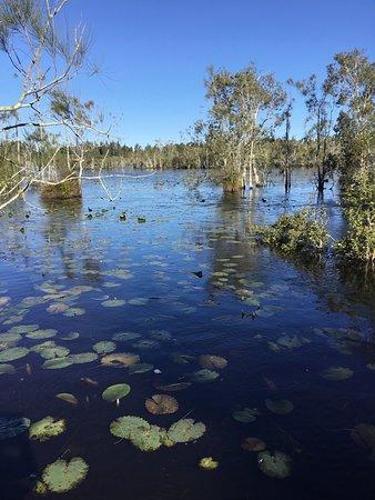 Wetland with ducks