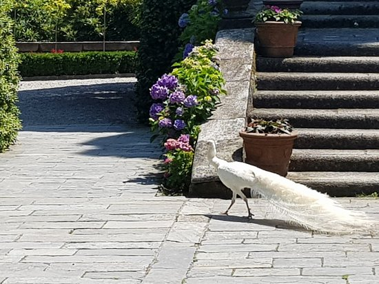 Isola Bella, Włochy: 20180616_135240_large.jpg