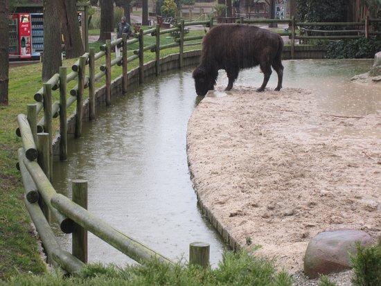 Zoo Aquarium de Madrid: Aunque llueva hay actividad