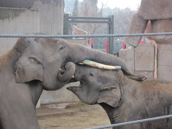 Zoo Aquarium de Madrid: La gran familia de elefantes siempre da bonitos momentos
