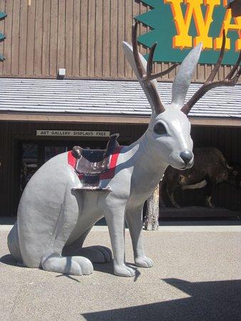 Wall, Güney Dakota: The famous jackalope