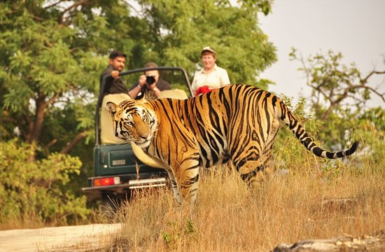 Ranthambore National Park taxi