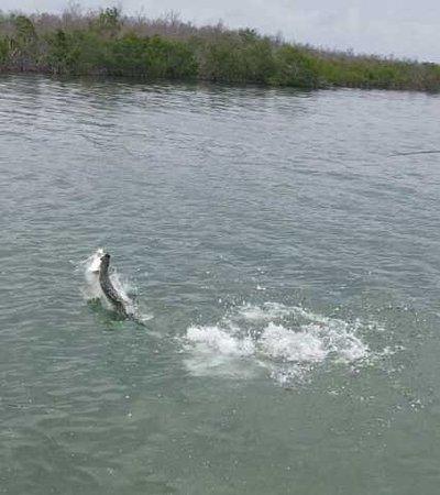 Sugarloaf Key, FL: Her jumping tarpon