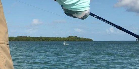 Sugarloaf Key, FL: My jumping tarpon