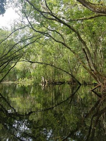 Lake Panasoffkee, FL: 20180617_104844_large.jpg