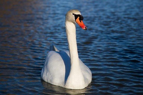 Saint-Cyprien, France : Le parc de la prade est le nid de nombreuses espèces.