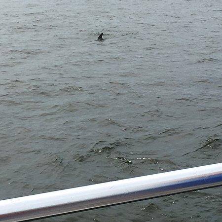 Фотография The Fun Boats Dolphin Cruises