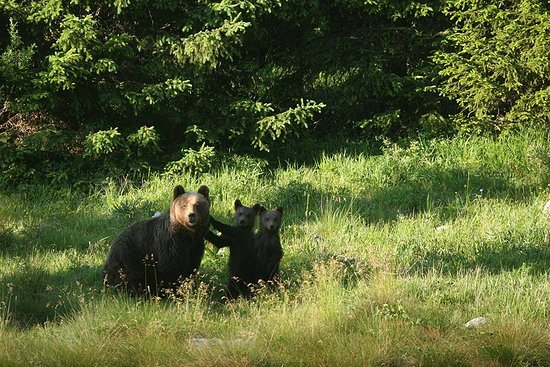 Sveti Juraj, Croatia: Bear Family by Krunoslav Rac