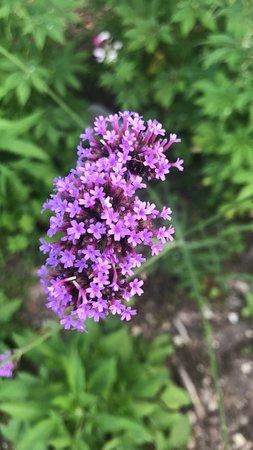 South Carolina Botanical Gardens: beautiful flowers