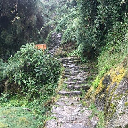 Llama Path: photo0.jpg