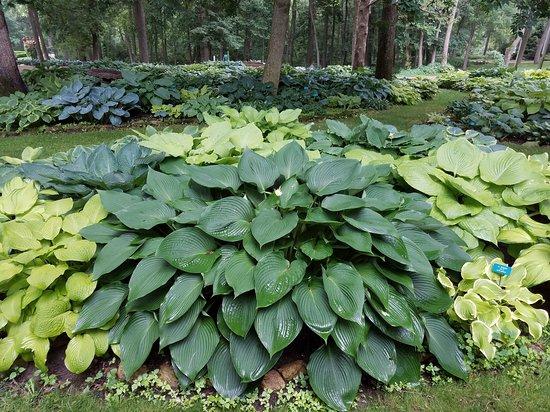 Extensive hosta garden - Picture of Dubuque Arboretum and Botanical ...