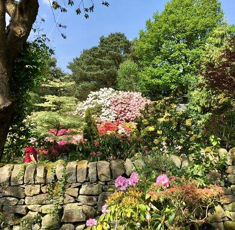 Lea Gardens: Looking down the hillside