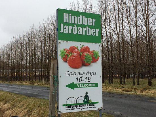 Selfoss, Island: Strawberry Greenhouse