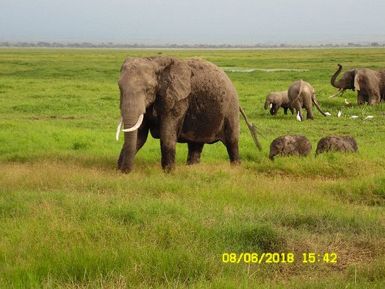 Amboseli National Park, Kenya: SAM_1270_large.jpg