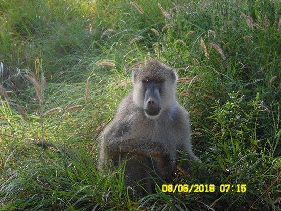 Amboseli National Park, Kenya: SAM_1213_large.jpg