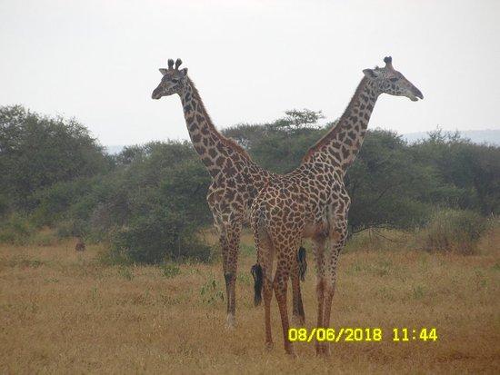 Amboseli National Park, Kenya: SAM_1223_large.jpg