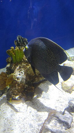 Newport Aquarium: 0608181026_large.jpg