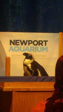 Newport Aquarium: 0608181005b_large.jpg