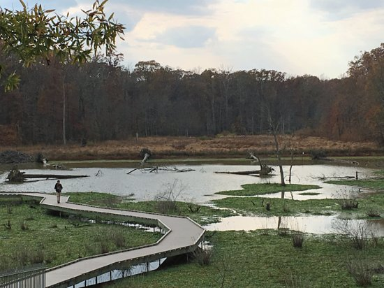 Alexandria, VA: Huntley Meadows Park