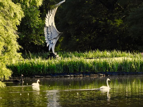 """Swan Lake Iris Gardens: """"Recovery Wing"""" by Grainger McCoy at Swan Lake and Iris Gardens"""