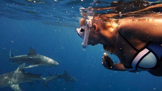 Bull Sharks Picture Of Florida Shark Diving Jupiter Tripadvisor