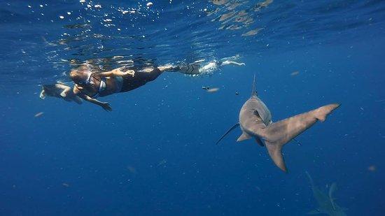 Bull Shark Picture Of Florida Shark Diving Jupiter Tripadvisor