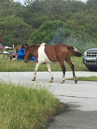 Assateague State Park Camping صورة فوتوغرافية