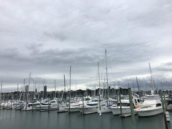 Auckland Photo