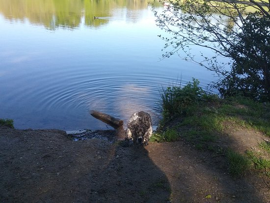 Tilgate Park: My dog coming out of the lake