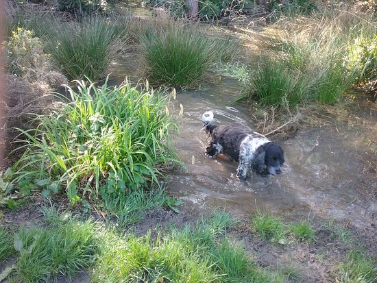 Tilgate Park: He has to go in dirty water