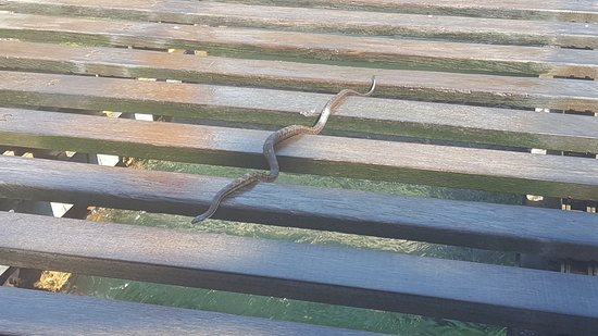 Kennywood Park: Snake on the rapids ride