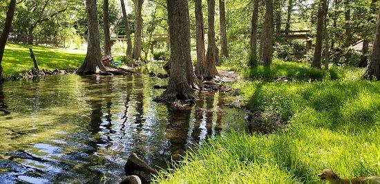 Cypress Creek Cottages: 20180614_103404_large.jpg