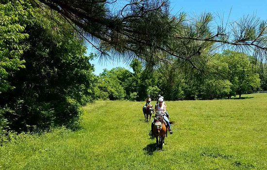 Petersburg, KY: Trot thru open pastures during your ride at First Farm Inn.