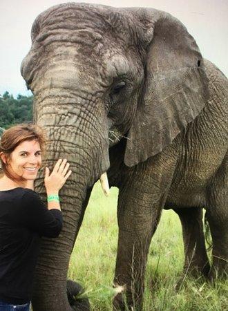 Knysna Elephant Park: Inesquecivel