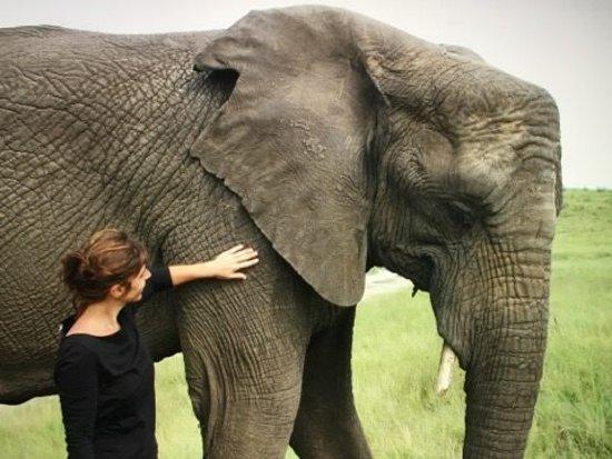 Knysna Elephant Park: unico